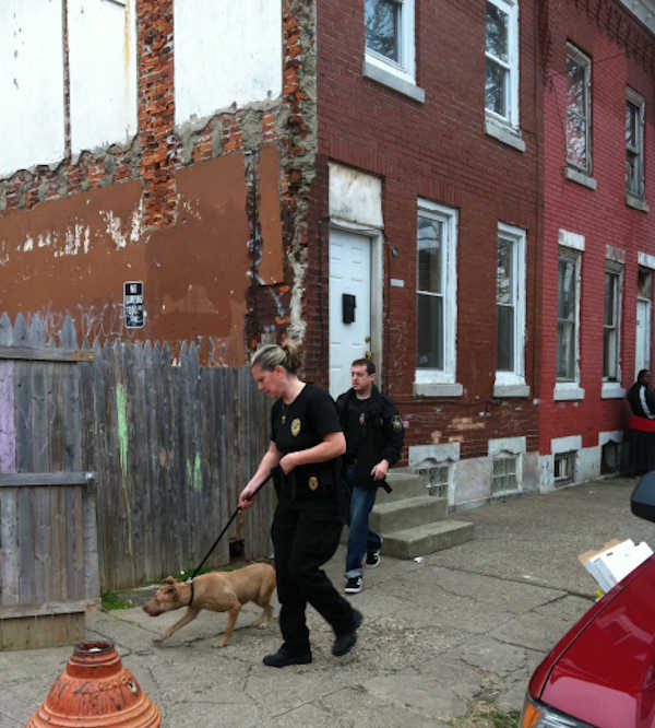 Dog fighting raid in Kensington