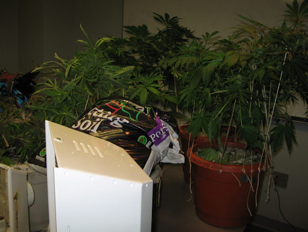 "<div class=""meta image-caption""><div class=""origin-logo origin-image ""><span></span></div><span class=""caption-text"">(Police released pictures of the marijuana that was allegedly found at the home of Jarrett Husid near the University of Delaware.)</span></div>"