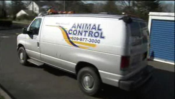 Pit bulls attack animal control officer