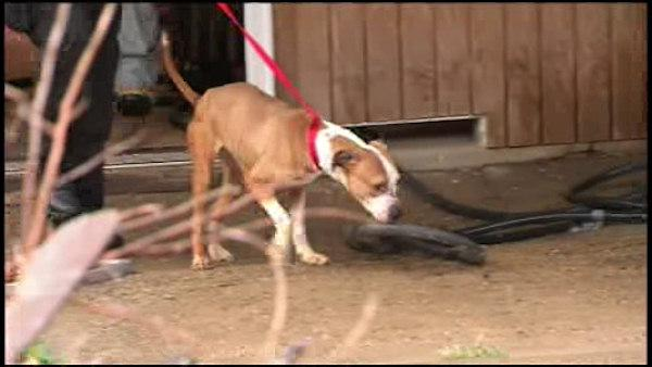 5th dogfighting raid in Philadelphia this week