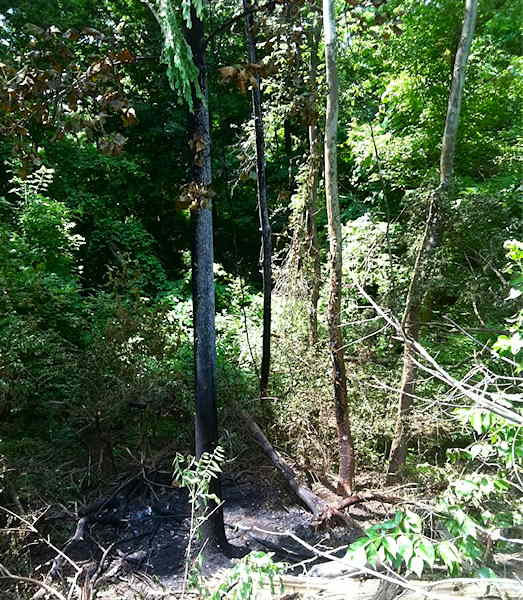 "A photo taken by Action News' Sarah Bloomquist showing the tree where a car crashed, killing ""Jackass"" star Ryan Dunn."