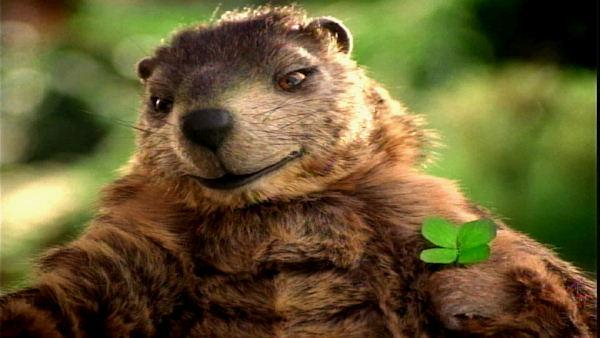 Gus, the second most famous groundhog in Pennsylvania, is the mascot for the Pennsylvania Lottery.  According to their website (palottery.com), Gus has appeared in over 30 commercials. Gus has been known to wrap, rap, tell jokes, and fall in love.