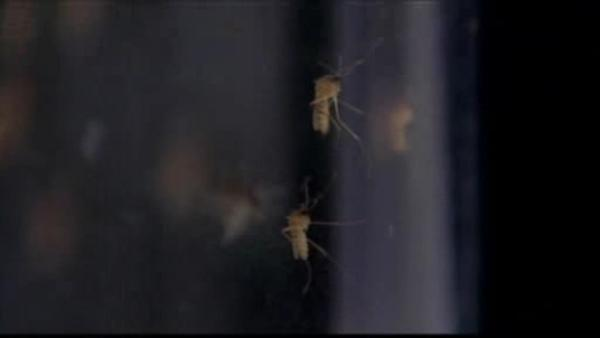 Tobacco warnings, West Nile Virus symptoms