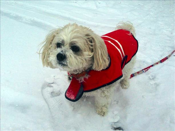 "<div class=""meta ""><span class=""caption-text "">January 29, 2014: An Action News viewer captured this scene: ""Milkshake staying warm in the snow!"" </span></div>"