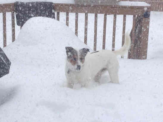 Our rescue dog from Mississippi is loving this snow storm! #6abcsnow <span class=meta>(Tracy, Saucon Valley, Pa.)</span>