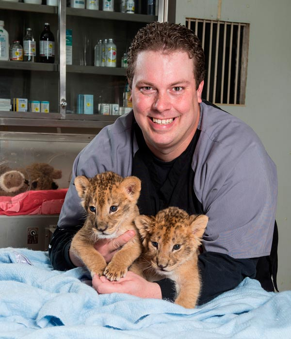 "<div class=""meta image-caption""><div class=""origin-logo origin-image ""><span></span></div><span class=""caption-text"">Six Flags Great Adventure and Safari's animal care team has adopted the role of surrogate mother to a pair of playful lion cubs born in January and a single cub born just two weeks ago.</span></div>"