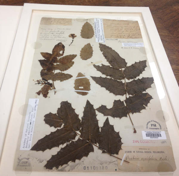 "<div class=""meta image-caption""><div class=""origin-logo origin-image ""><span></span></div><span class=""caption-text"">Plant specimen from the Lewis and Clark expedition.</span></div>"