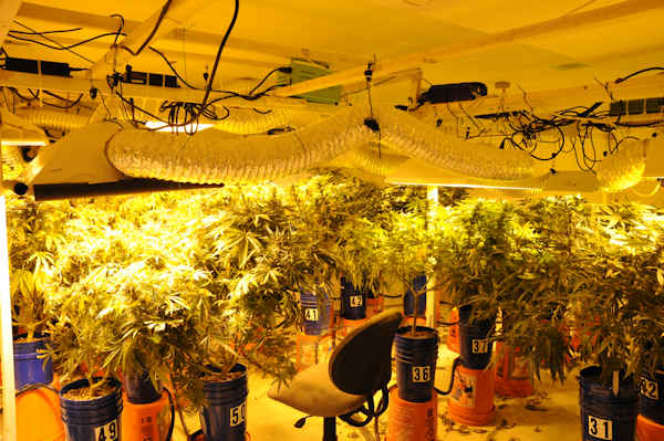 "<div class=""meta ""><span class=""caption-text "">Prosecutors say police raided Titone's home at 6:00 a.m. on Tuesday, May 7th, 2013 and found a sophisticated hydroponic grow operation with 188 marijuana plants in various stages of growth.  Authorities say the elaborate hydroponic system filled the basement.  It included grow lights, an irrigation system, and ventilation. </span></div>"