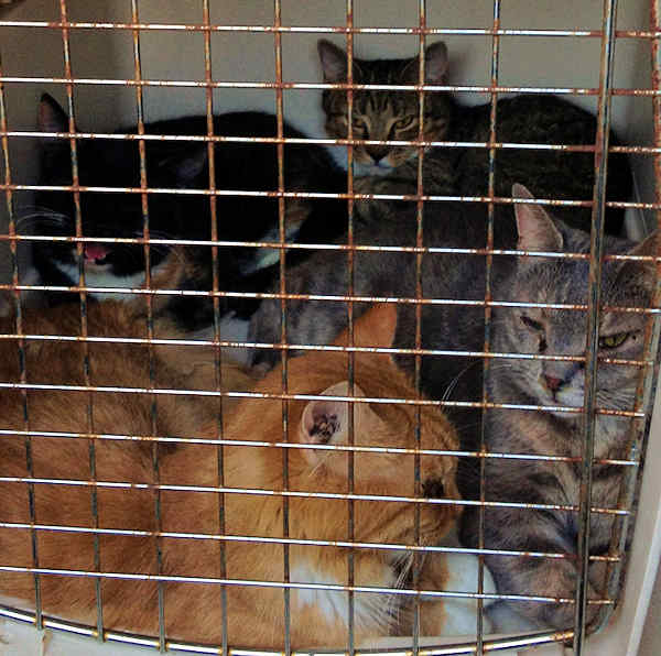 Officers say they found 98 cats and kittens at a home on Thompson Road in Milford, Delaware.  Delaware Animal Care and Control released pictures taken after the animals were seized.  Authorities say they hope to get them healthy again and find them good homes.