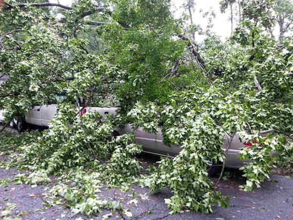 Storm damage from Newark, Delaware.  From Twitter follower @djmashup2009.