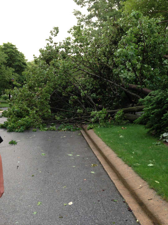 An Action News viewer took this photo of a tree down in Shipley Woods, Talleyville, Delaware on Monday, June 24, 2013. <span class=meta>(Viewer Photo)</span>