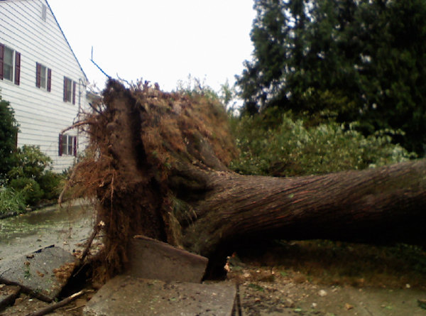 Submitted by:Michael L. Kitain  Caption:The roots of a tree knocked over during the storm that hit Drexel Hill Thursday afternoon tear up an entire sidewalk block along with them.   RELATED: CLICK HERE for more viewer submitted photos: