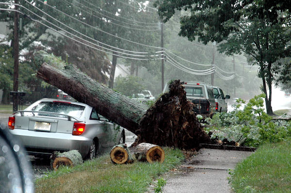 Submitted by:Jo  Caption:Tree Down in Turnersville, N.J.   RELATED: CLICK HERE for more viewer submitted photos: