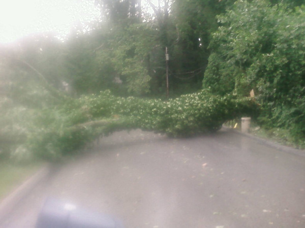 Submitted by:Charles   Caption:Tree in Havertown   RELATED: CLICK HERE for more viewer submitted photos
