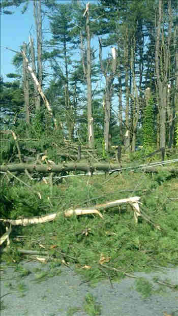 "<div class=""meta ""><span class=""caption-text "">An Action News viewer sent in this photo of several downed trees from a summer storm in Middletown, Delaware. </span></div>"