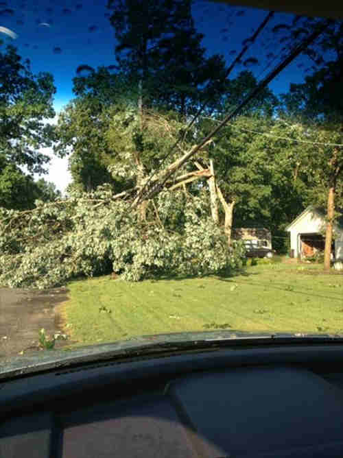 An Action News viewer sent in this photo of downed trees from this weekend's deadly summer storms.