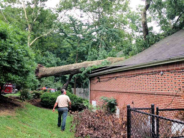 July 12, 2013: Zoo officials say 24 monkeys, one bird and a zoo employee were inside when a large tree fell on the Exotic Animal House at the Brandywine Zoo in Wilmington, Delaware. No injuries were reported.  All the animals were safely relocated to another building.