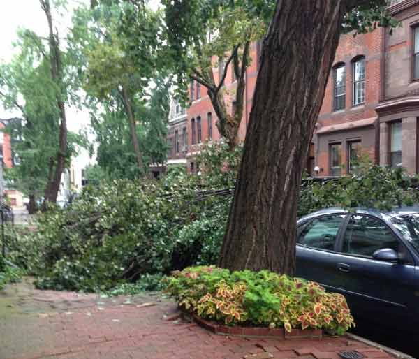 An Action News viewer sent us this picture of a downed tree on the 2300 block of Delancey Street in Center City Philadelphia.