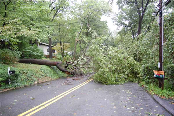 Tree blocks roadway and brings down power lines on Arden rd in Gulph Mills.   Viewer photo of damage from Hurricane Irene submitted through sendit.6abc.com