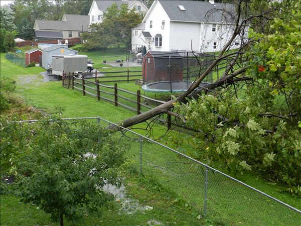 Another tree down in Bethlehem, Pa.  Viewer photo of damage from Hurricane Irene submitted through sendit.6abc.com