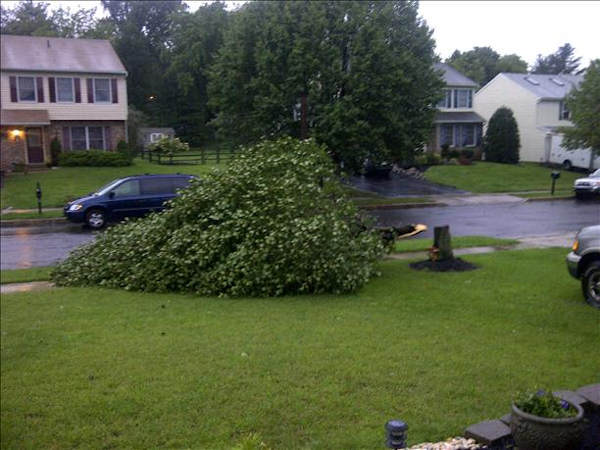 A tree down on Chalfont, Pa.  Viewer photo of damage from Hurricane Irene submitted through sendit.6abc.com