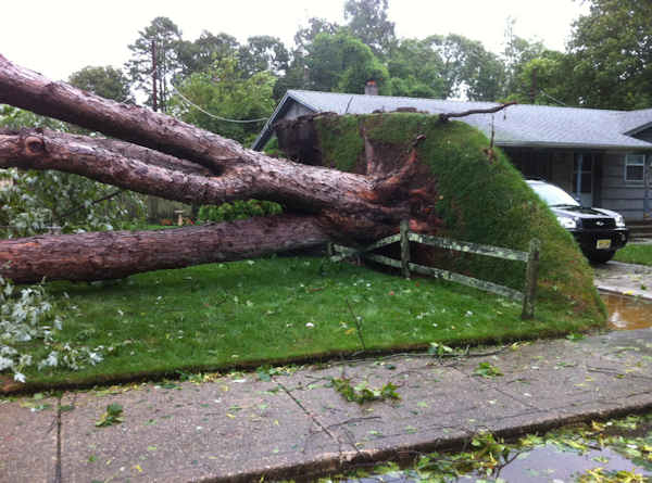 Photographer Alexander Cohen took pictures of a massive tree that fell during Hurricane Irene in Northfield, New Jersey.