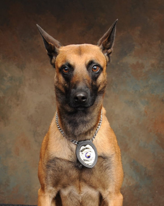 Plymouth Township Police Officer Brad Fox was shot and killed responding to a hit-and-run crash on September 13, 2012. His K-9 partner Nick, pictured, was also shot, but survived.