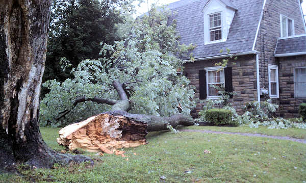 "<div class=""meta ""><span class=""caption-text "">September 18, 2012: An Action News viewer submitted this picture of a tree down in East Norriton, Pa.</span></div>"