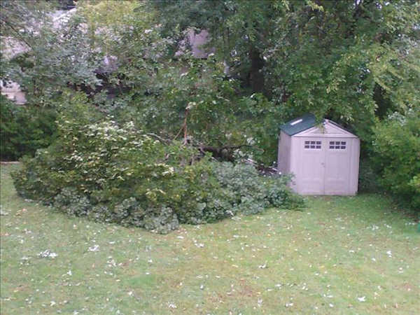 September 18, 2012: An Action News viewer submitted this picture of a tree down in Ridley, Pa.