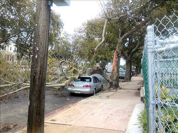 September 18, 2012: An Action News viewer submitted this picture of a large tree that fell on a car Tuesday.  Location unknown.