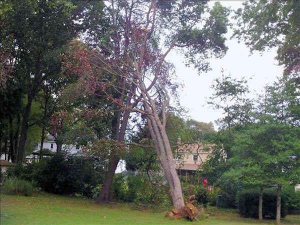"<div class=""meta ""><span class=""caption-text "">September 18, 2012: An Action News viewer submitted this picture of a tree uprooted in Hamilton, N.J.</span></div>"