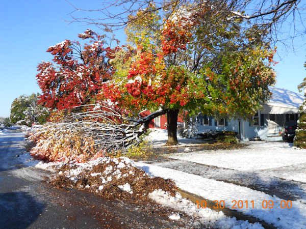 A maple tree could not handle the heavy snow that fell on Saturday, October 29th. From Bethlehem Pa. Send in your photos to sendit@6abc.com.