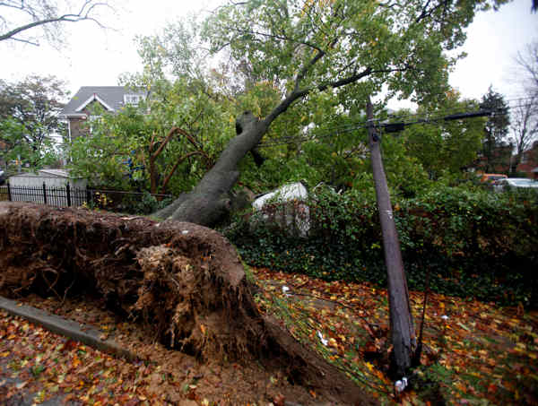 A fallen tree lies on top of wires and a crushed shed in Havertown, Pa. on Tuesday Oct. 30, 2012 in the aftermath of superstorm Sandy.  <span class=meta>(AP Photo&#47;Jacqueline Larma)</span>