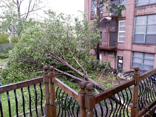 "Adam Joseph: ""Thankfully, it did not fall on the deck, rather into my neighbor's yard. Ripped a fence apart and clothesline."""