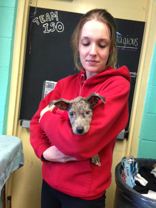 "<div class=""meta ""><span class=""caption-text "">The Delaware County SPCA is caring for two dogs named Bambi and Faline, who were discovered abandoned in a Chester home on Monday, November 4, 2013. Pictured: Bambi (Delco SPCA)</span></div>"
