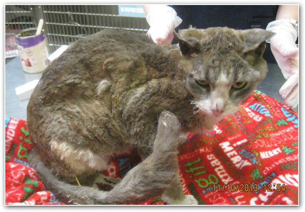 The Pennsylvania SPCA has issued a &#36;2,000 reward for information leading to the arrest and conviction of those responsible for setting a cat on fire.  <span class=meta>(Photo&#47;PSPCA)</span>