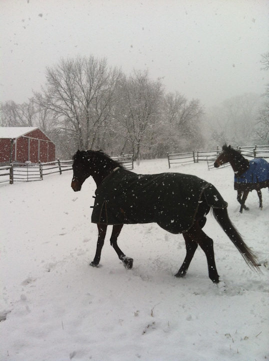 November 27, 2012: An Action News viewer sent this view from Fairfield Farm in Solebury, Pa.