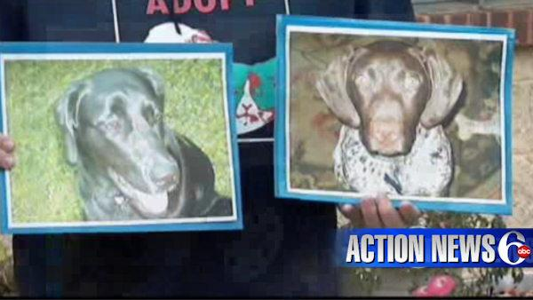 VIDEO: Family dogs killed in Chester Co.