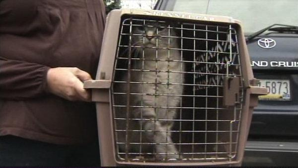Cat hoarding case in Audobon