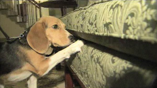 4-legged friend joins fight against bedbugs