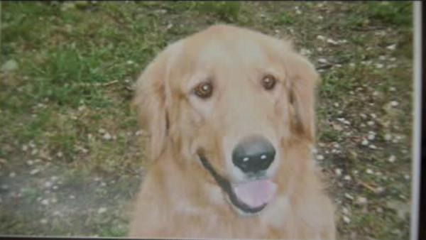 Officials: Poisoned meat likely killed dogs