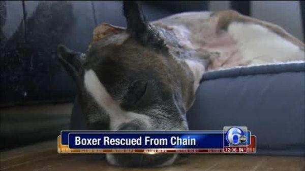 Dog found nearly dead, rescued in N. Phila.