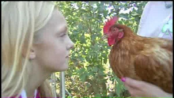 Law takes chickens away from 10-year-old