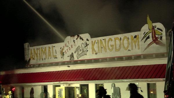 Giraffes, dogs, cats killed in NJ zoo fire