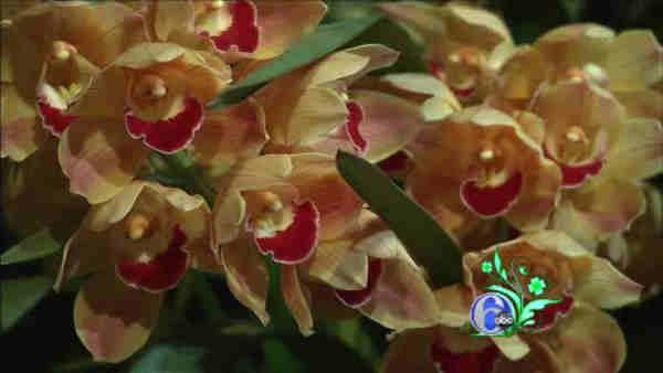 Philadelphia Flower Show preview