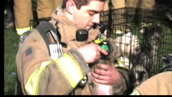 20 dogs rescued from N.J. fire