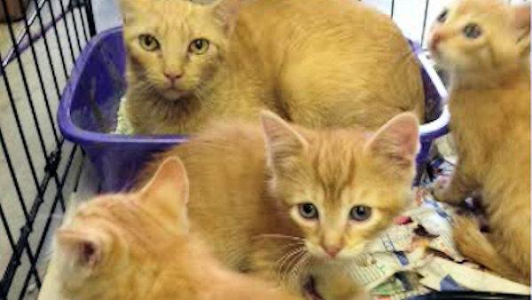 Police: 98 cats found in Delaware home