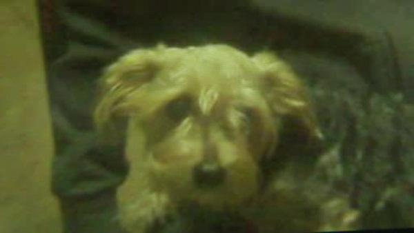 Charred remains of small dog found in Coatesville