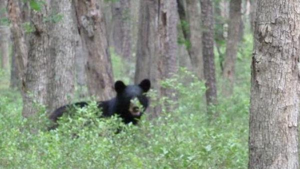 Bear sightings in Winslow Township