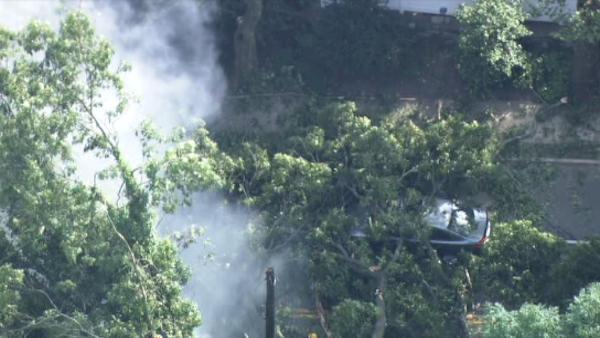 Tree falls on car, driver speaks